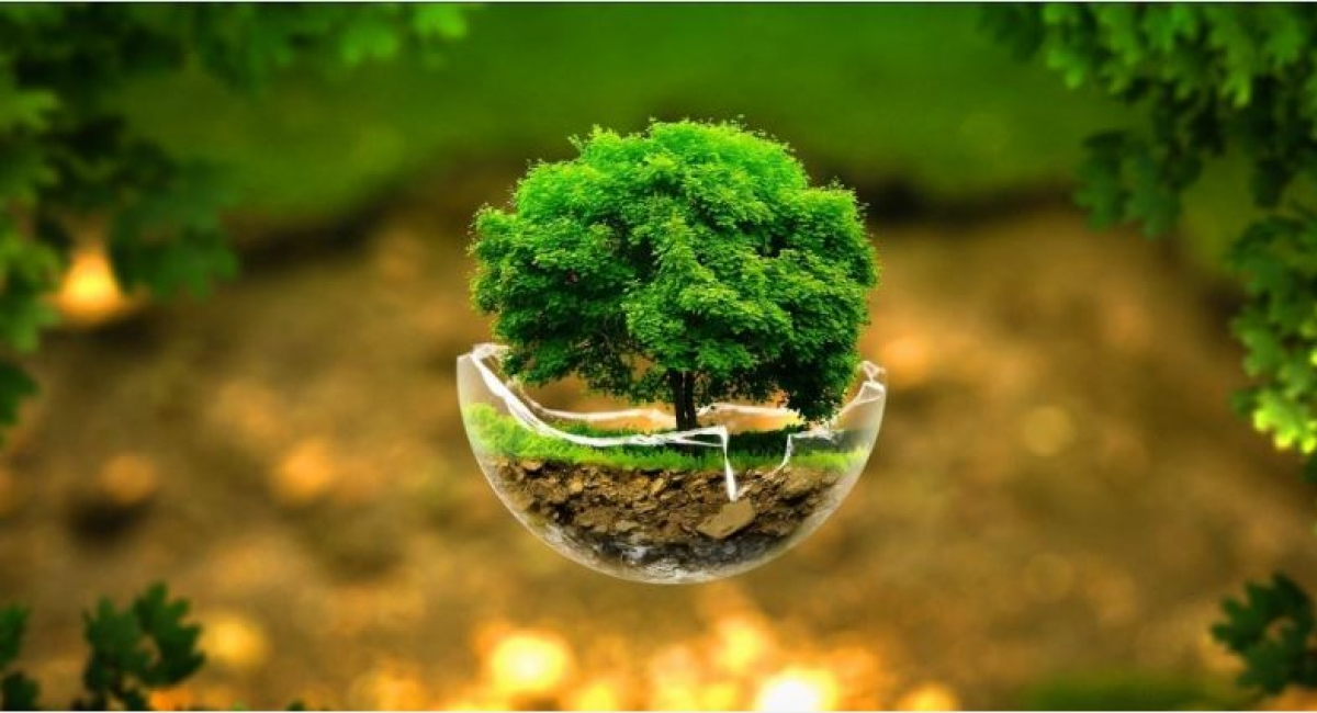 environment conservation act 1995